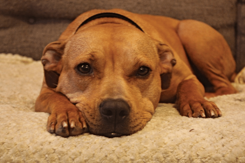 Adopting A Rescue Dog: Day 1 - Bringing Home Your Rescue Dog