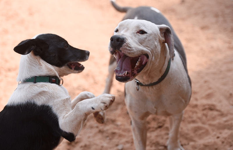 Adopting A Rescue Dog: Day 4 - Developing a Relationship with Your New Dog