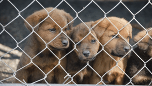 What You Need to Know Before Adopting a Rescue Dog