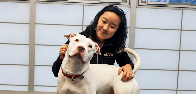 Adopting A Rescue Dog: Day 2 - Getting to Know Your new Dog