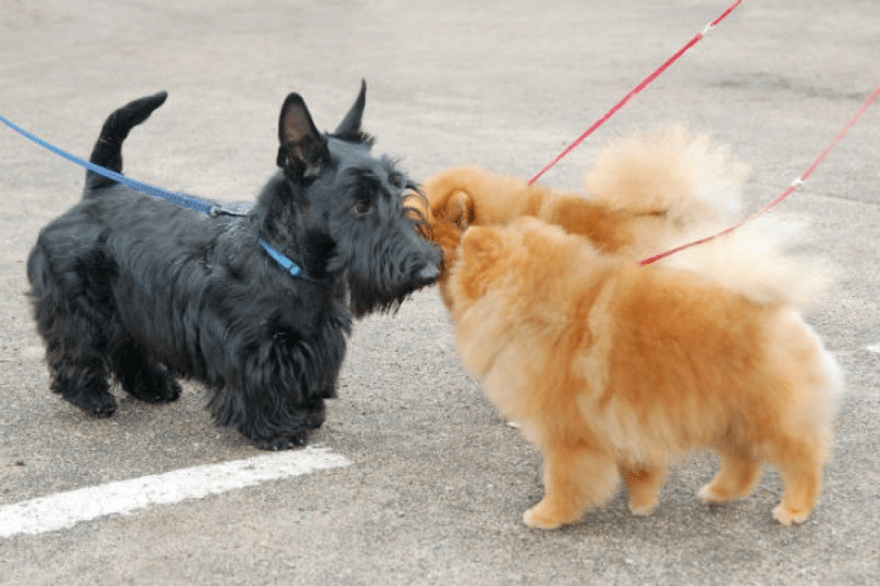 Adopting A Rescue Dog: Day 6 - Introducing New Rescue Dog to Your old Dog
