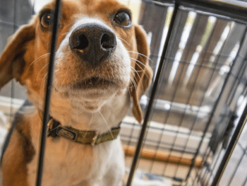 Crate Training a Rescue Dog