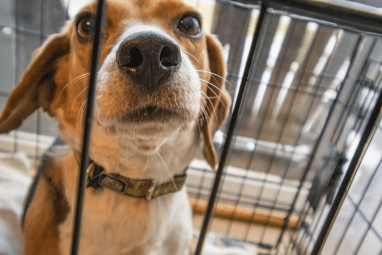 Crate Training a Rescue Dog: Ultimate Guide to Solving Common Problems