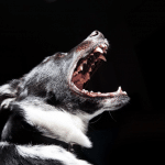 Dog with Fear Anxiety and Aggression