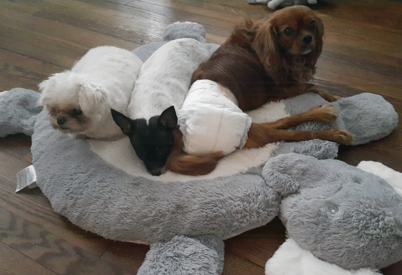 My rescue dogs enjoy the bed