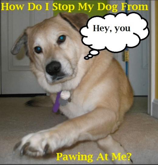 Stop a Dog Putting Paws on You