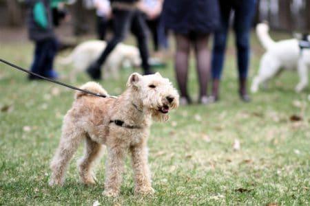 Dog Exercise: Dog park
