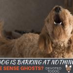 Dog barks at nothing at night