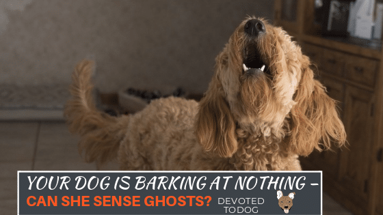 Dog Barks At Nothing At Night