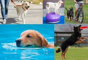 How Much Exercise Does a Dog Need Every Day? [Including 26 Fun Indoor and Outdoor Workout Ideas]