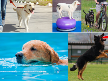 How Much Exercise Does a Senior Dog Need