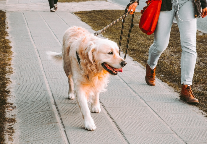Walk Your Dog: How Often, How Long, and How Far?