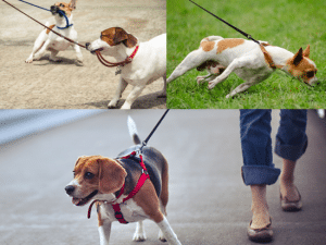 Walk Your Dog: How Often, How Long, How Far? – Dos and Don'ts