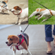 How Often Should You Walk Your dog