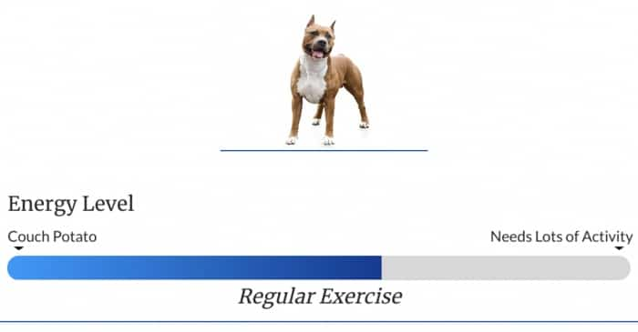 Staffordshire Terrier Exercise Level