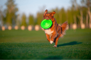 Best Frisbees For Dogs