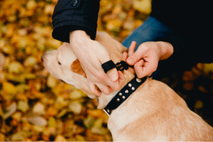 Best collars for dog training