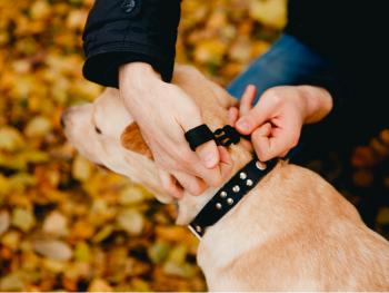 Best collars for dog training