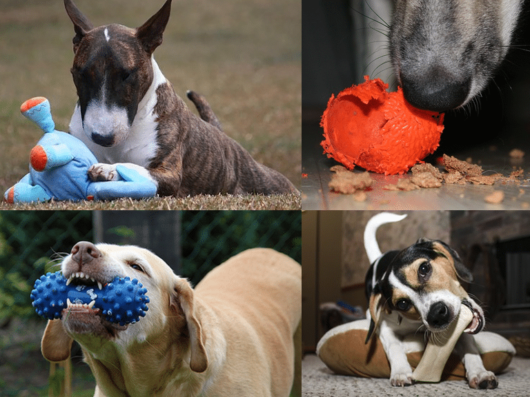 Best indestructible dog toys