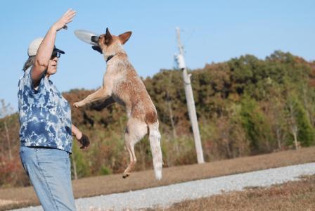 Dog Exercise: Play Frisbee